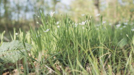Gras und Blumen
