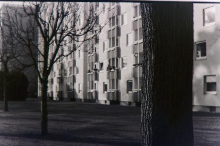 Baum vor Wohnblock
