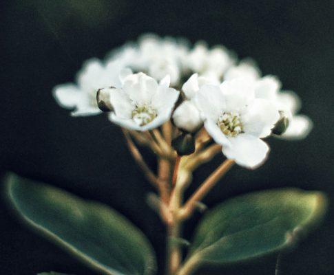 Mit dem Makro auf Blüten- und Blätterjagd