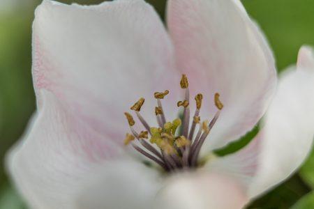 Bienenspielwiese