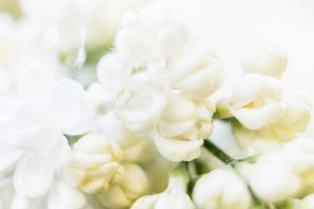 Blütenklumpen