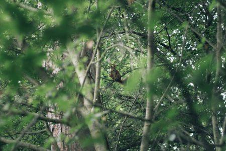 Hörnchen im Blätterrausch