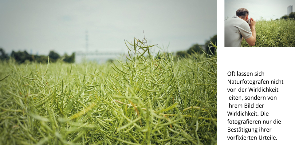 Naturfotografie Buchkonzept 01