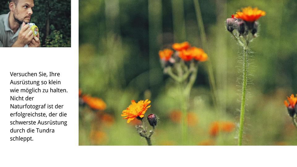 Naturfotografie Buchkonzept 02