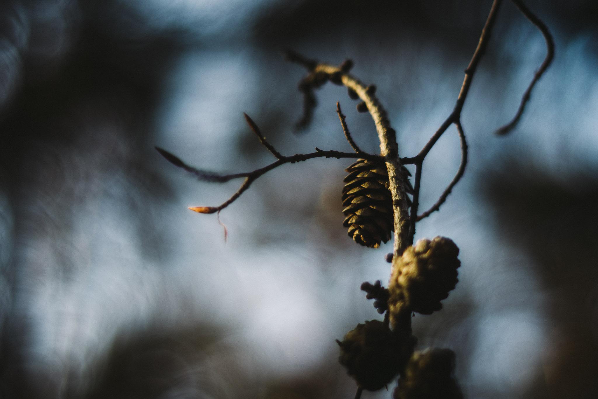 Mytischer Wald und Kiefernzapfen
